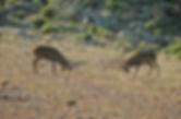 Vides Parque Natural Sierra Andújar