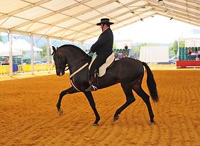 andujar caballos