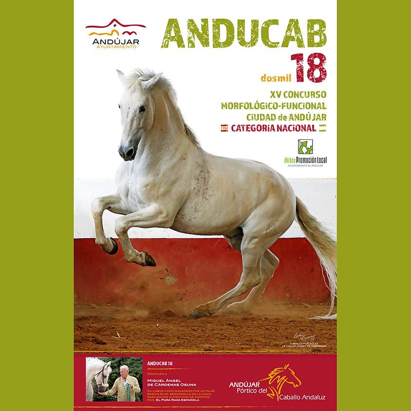 Anducab 2018