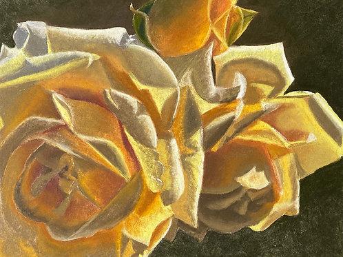 Trio of yellow roses