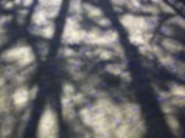 IMG_1688 2.jpg