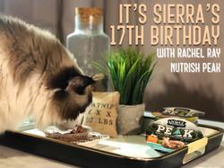Peak Rachel Ray Cat Food Review