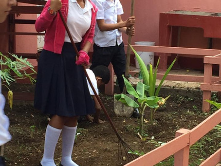 WMO School Students Learn Agriculture by growing their own Garden