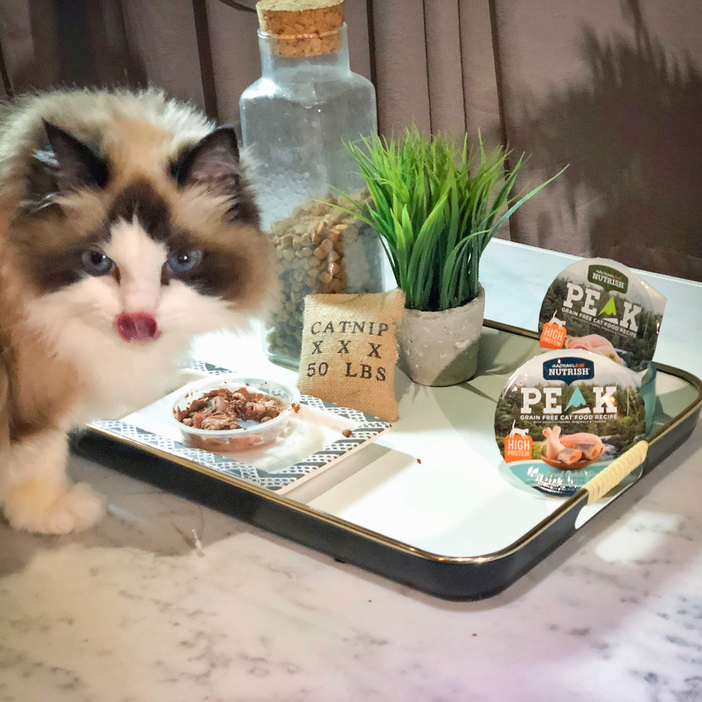 Rachael Ray Nutrish Woodland Cat Recipe with Real Chicken + Trout in Savory Sauce