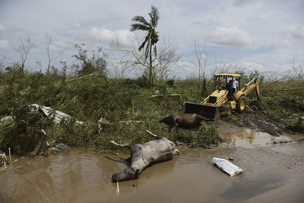 Water sources infected by sewage in Puerto Rico