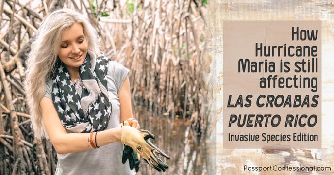 Puerto Rico Invasive Species - Amanda Sowards