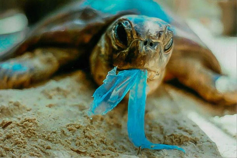 Plastic hurting sea turtles