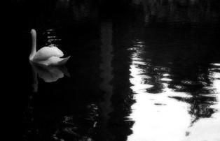 simone lisciani photography
