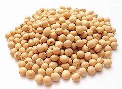 Soybeans Soya Beans