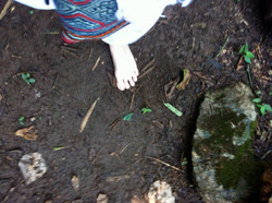 Barefoot through the jungle
