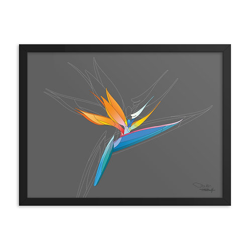 Bird of Paradise - Framed Print