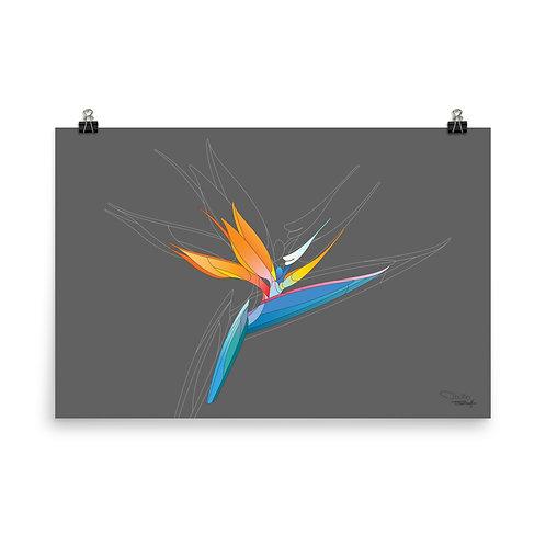 Bird of Paradise - Print