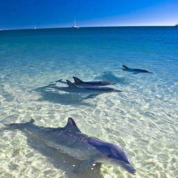 Dolphin watch Trips!