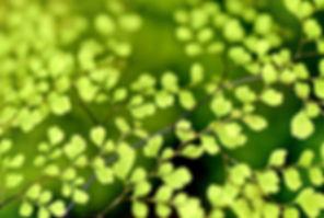 leaves-1037624_1920.jpg