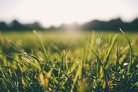 Naturopathie-herbe.jpg