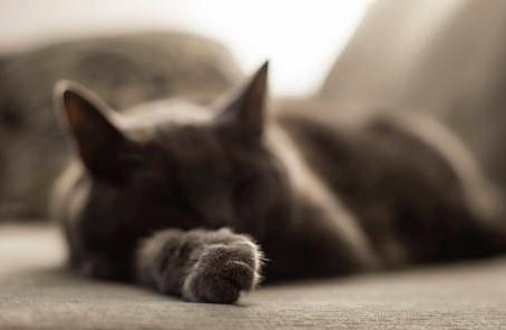 Γιατί οι γάτες μας κοιμούνται τόσες ώρες;