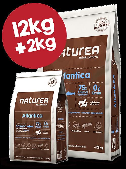 Grain Free Atlantica 12kg
