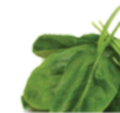 naturea-petfoods-cyprus-spinach-icon.png
