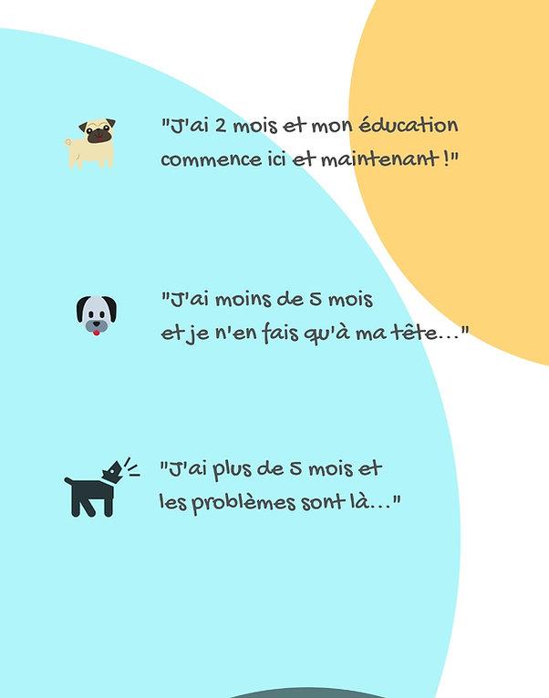 éducation canine, comportement, chien