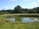 pond rs.jpg