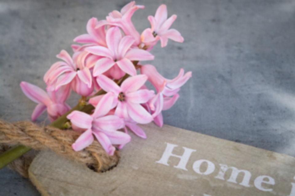 hyacinth-1403159_960_720.jpg