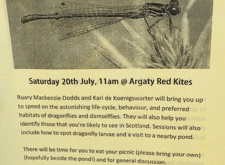 Argaty Red Kite Centre