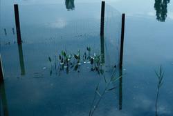 5 ARROWHEAD PLANT PEN