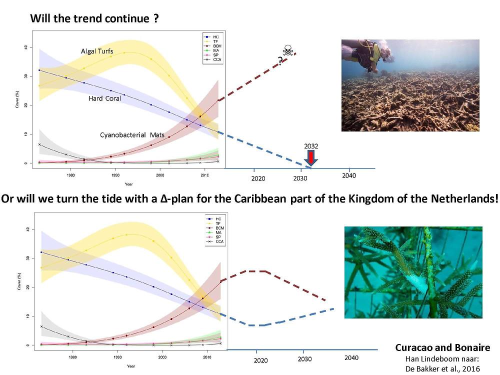 XpBonaire, IslandLife, Bonaire, News, Information, Environment, Coral Reef decline, Delta Plan