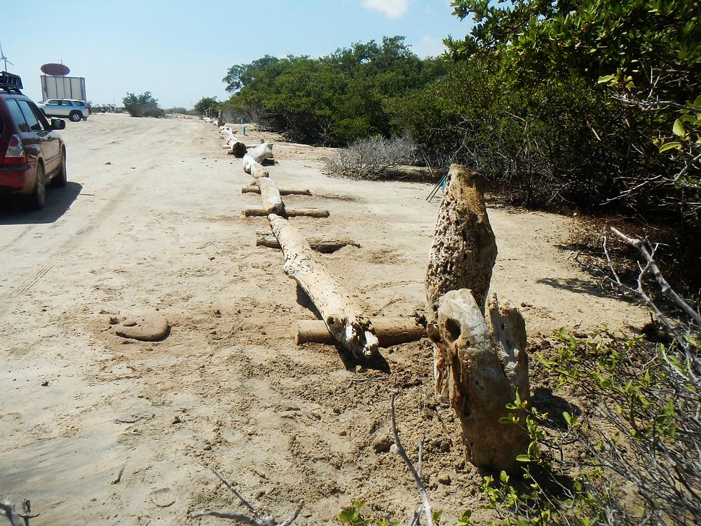 XpBonaire , Island Life, Bonaire, News, Information, get involved., STCB, Mangrove, Lac Bay