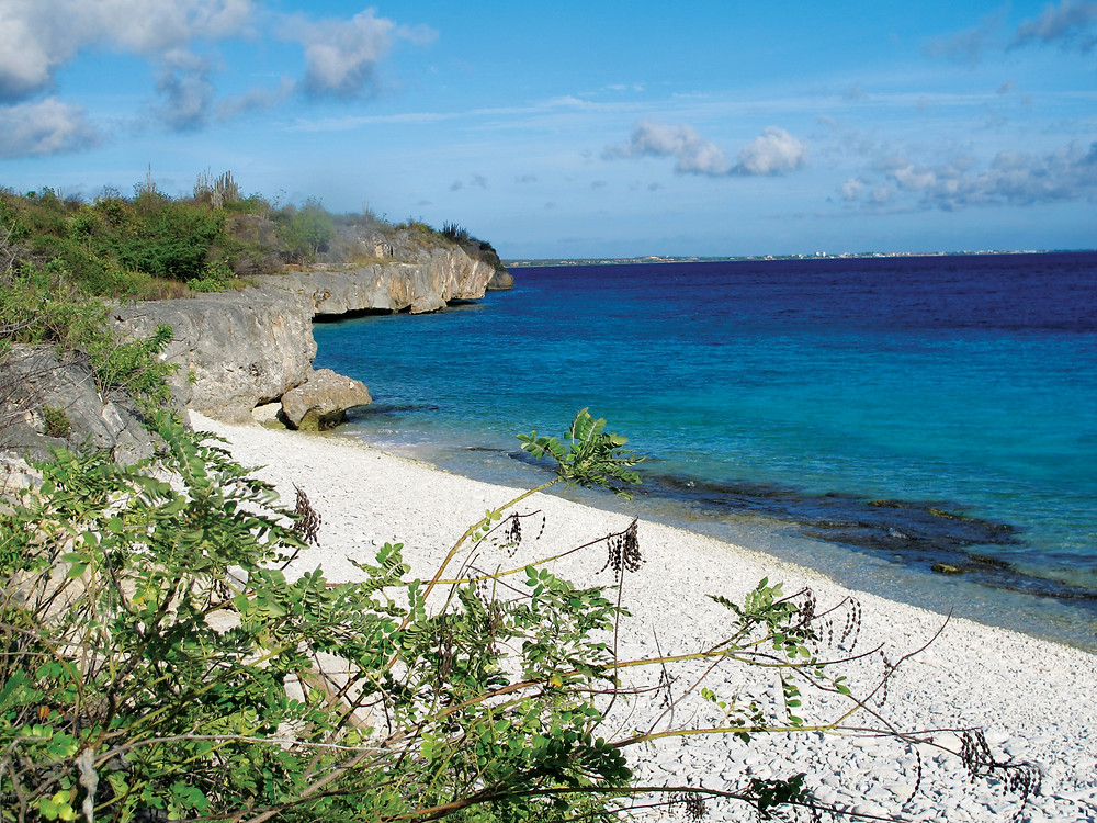XpBonaire, Island Life, Information, get involved, Echo, Reforestation Project Bonaire