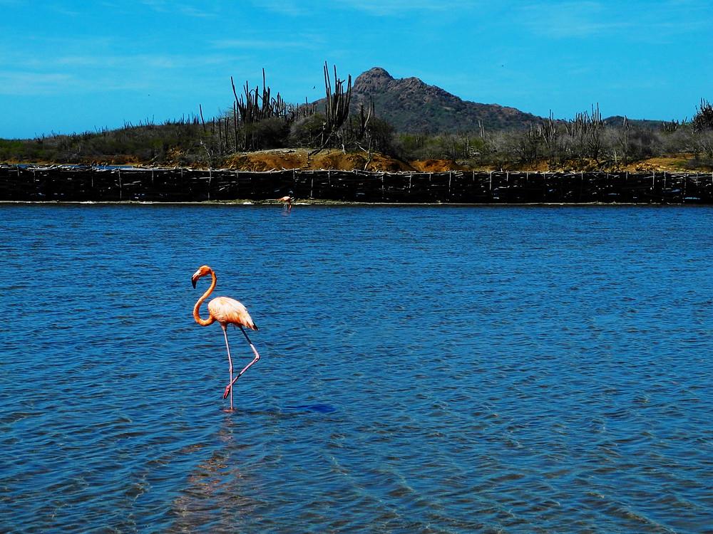 Xp Bonaire, Bonaire, news, Information, STINAPA, events, entertainment, Bird Watching
