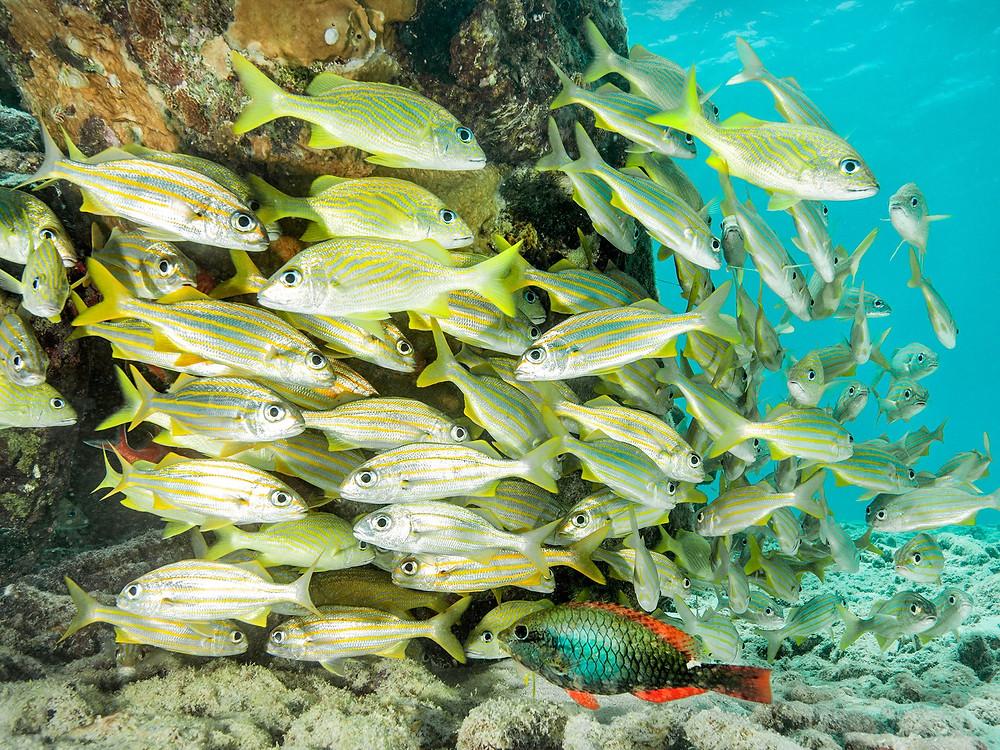 XpBonaire, IslandLife, Bonaire, News, Information, TCB, Top 3, Conde Nast Traveller