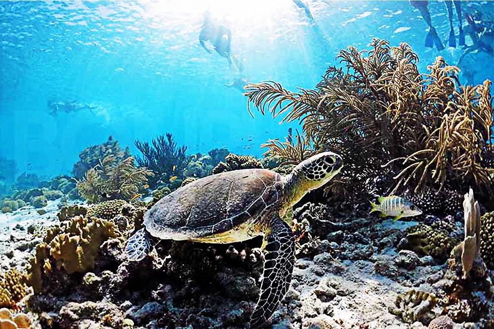 XpBonaire, IslandLife, Bonaire, News, Information, Best Snorkeling, MSN.com
