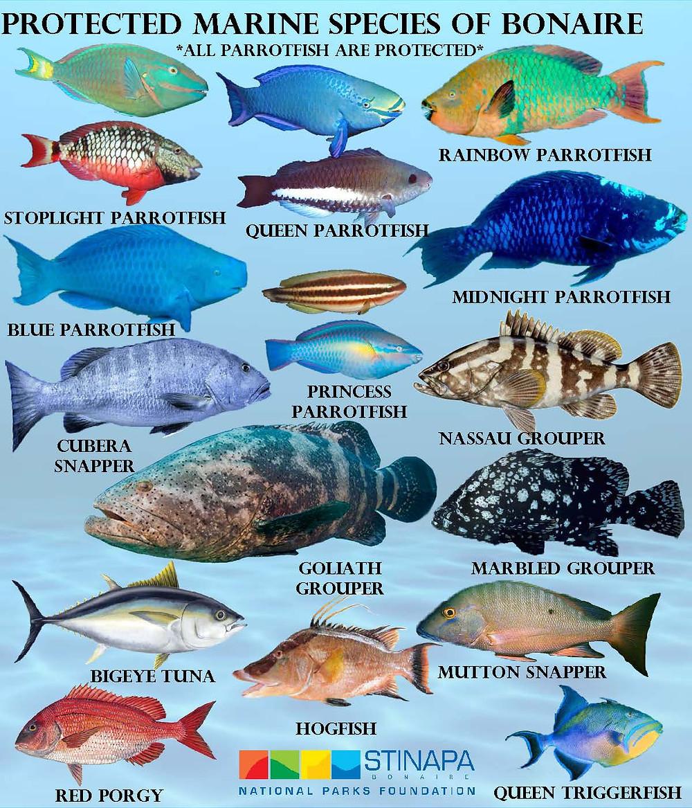 XpBonaire, IslandLife, Bonaire, News, Information, Protected Sea Species, STINAPA