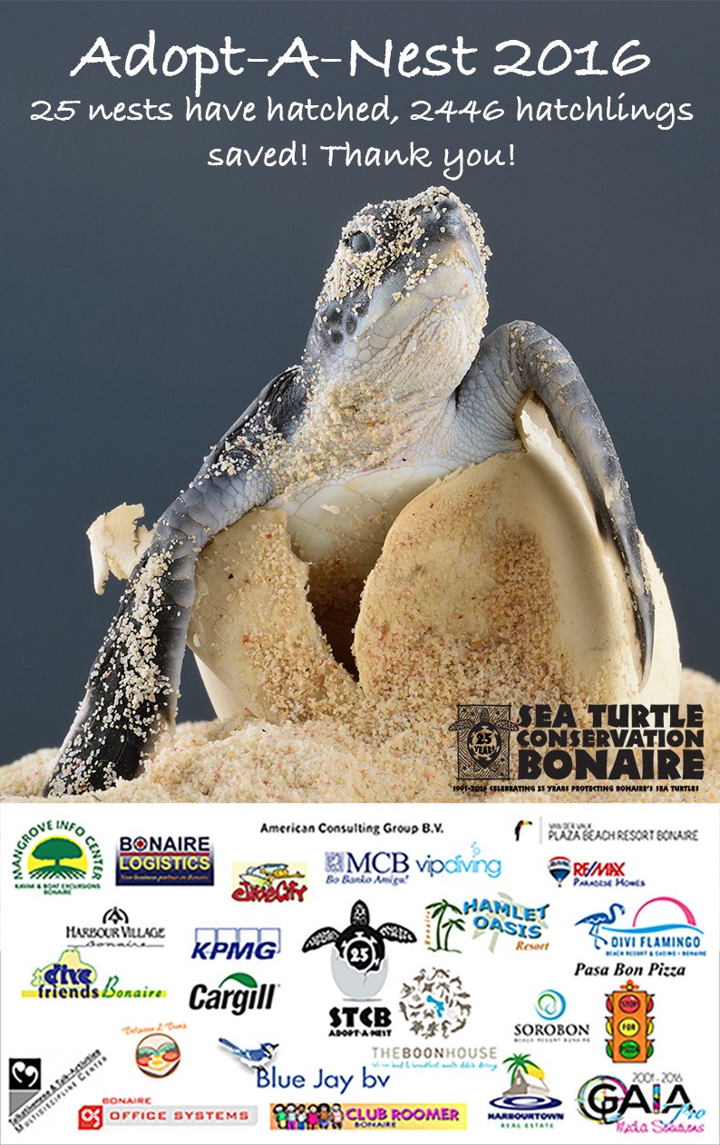 XpBonaire Island Life, Bonaire, News, Information, SYCB, Sea Turtle, Adopt a Nest