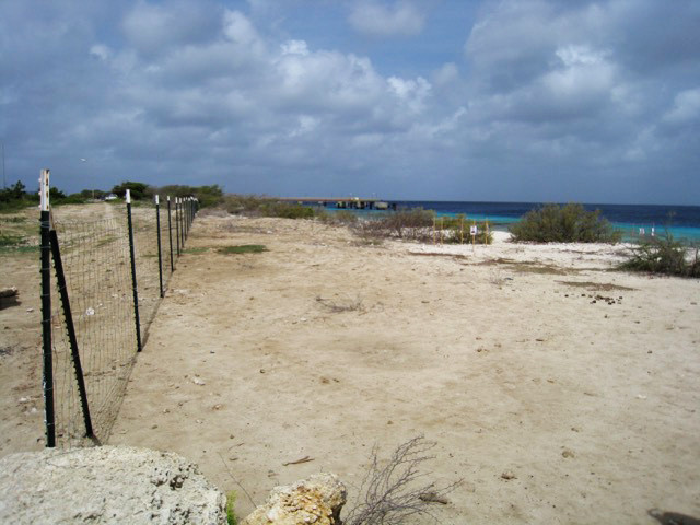 XpBonaire, Bonaire, News, Information, STCB, Fencing, Protection, Sea Turtle
