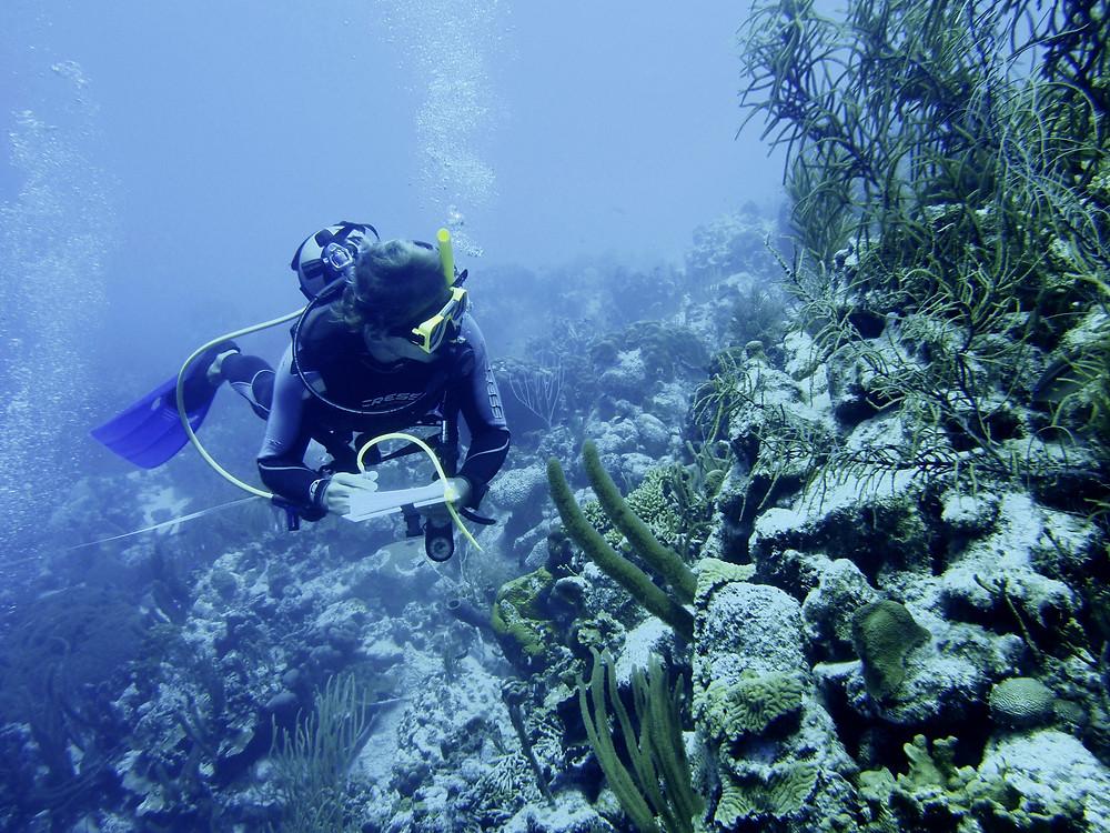 XpBonaire, IslandLife, Bonaire, Information, Connecting people with Nature, CiEE, STINAPA, Damage Assessment, Hurricane Matthew