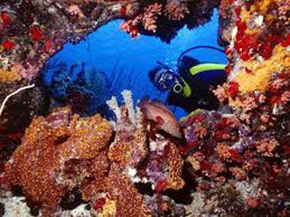 XpBonaire IslandLife, Bonaire, Information, Events, STINAPA, CIEE, Coral, Presentation