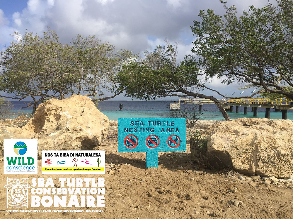 Xp Bonaire, Bonaire, News, Information, STCB, Sea Turtle, Nesting Area