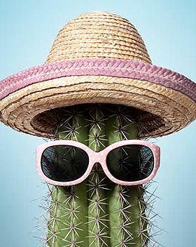 naked-cactus-pink-400px.jpg