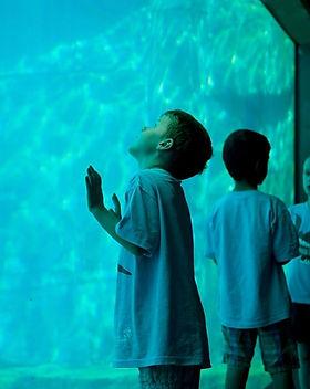 vancouver acquarium.jpg