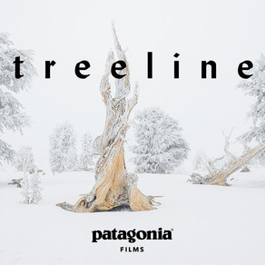 Treeline, a film about nature by Patagonia