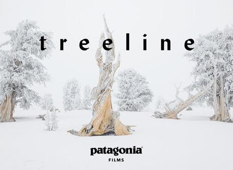 Treeline, une vidéo de Patagonia