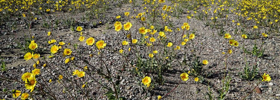 DV bloom 1 (1 of 1).jpg