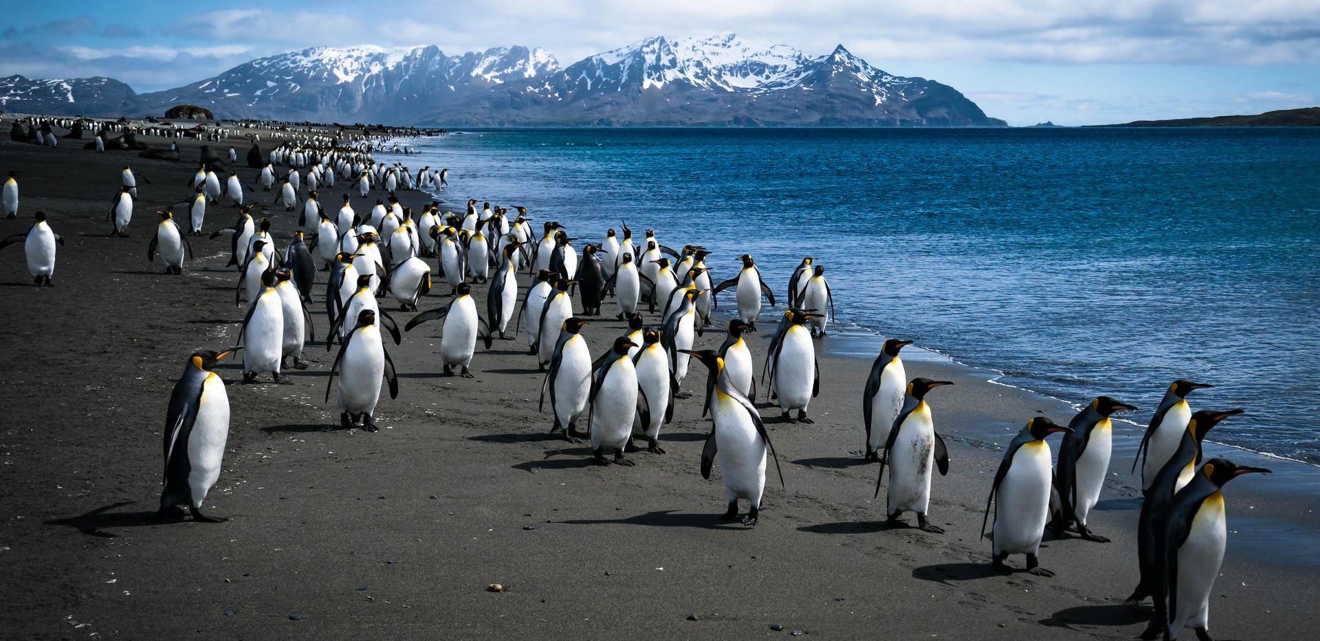 Antarctica 6.jpg