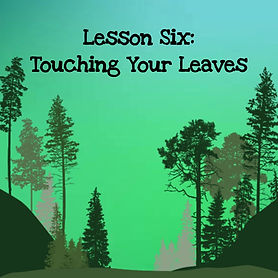 The wisdom of trees audio course. Lesson six touching your leaves.