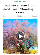 A guided meditation connecting to the wisdom of Ironwood tree