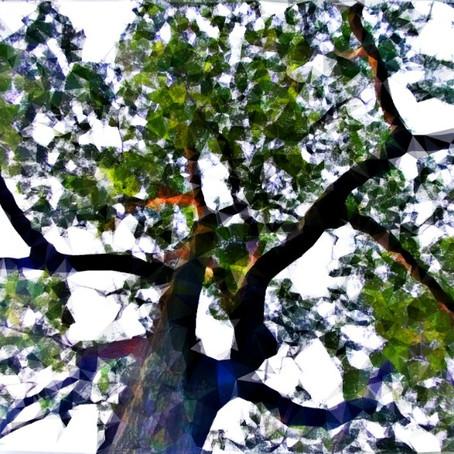 Trees Talk: Trees Our Spiritual Teachers