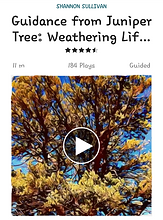 A guided meditation connecting with the wisdom of Juniper tree