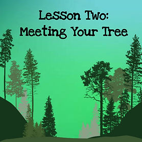 The wisdom of trees audio course. Lesson two meeting your tree teacher.